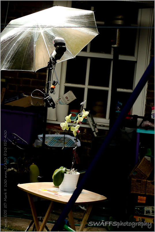 IMAGE: http://www.swaffs.co.uk/images/2009/MacroOrchis-080709-WEB/RSMacroOrchids-080709-4464.jpg