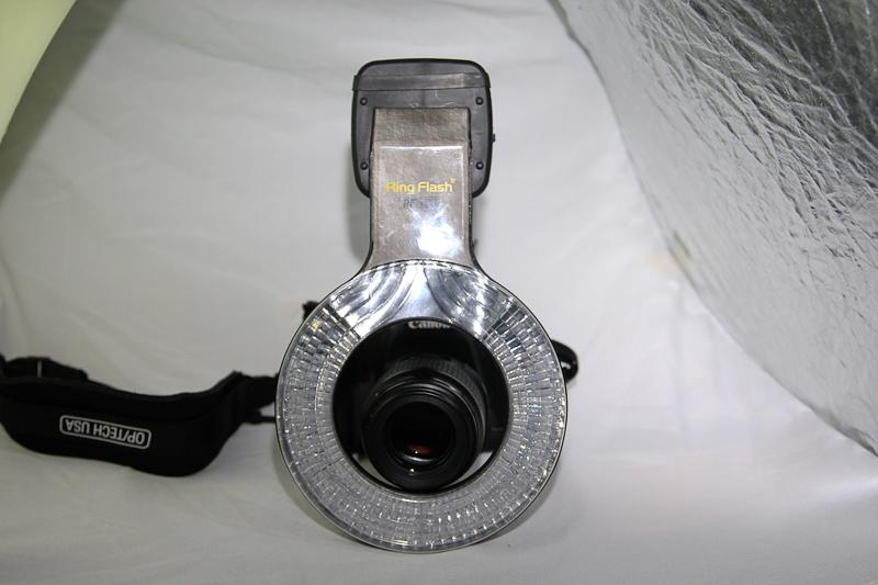 IMAGE: http://www.swaffs.co.uk/images/2010/RSJan2010-Ringflash/RS10JanRingflash-5444.jpg